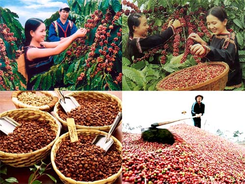 buy vietnamese coffee bean